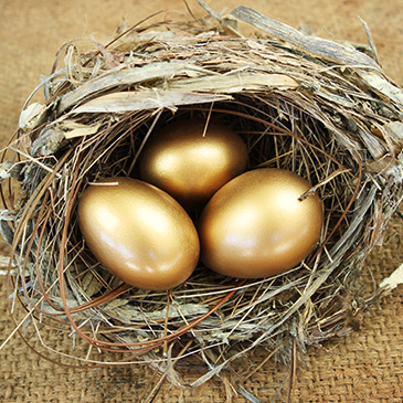 Photo of nest with golden eggs representing Wealth